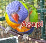 Agapi with name