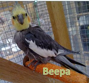 beepa with name