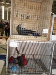 black parrot 2