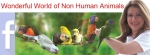 All about Birds & Animals!