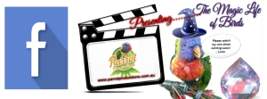 Webisodes all about Birds!