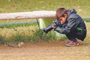wildlife-photography-wildlife-photographer