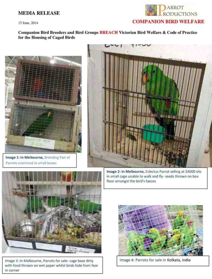 1. final MEDIA RELEASE  Bird Breeders and Bird Groups Breach Code of Practice for the Housing of Caged Birds final1