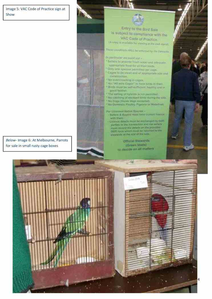 4. inal MEDIA RELEASE  Bird Breeders and Bird Groups Breach Code of Practice for the Housing of Caged Birds final4
