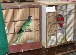 crimson rosella in rusty cages at Mornington Peninsula Bird Show Melbourne