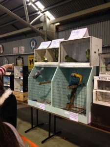 budgies and macaw2