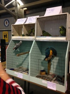 budgies and macaw3