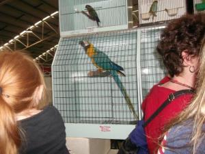 macaw 2014