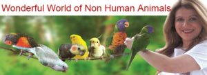 All about Birds and Animals!