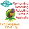Loving trusting homes needed for Australian Birds!